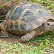 Take the Tortoise Challenge